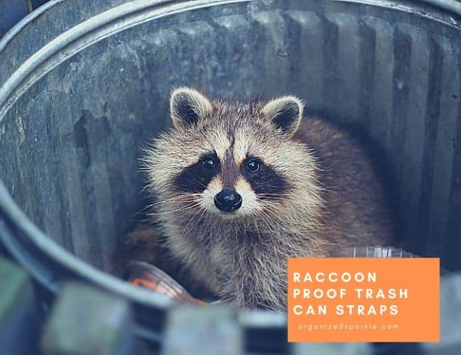 Raccoon Proof Trash Can Straps Ideas for Keeping animals away fromyour trash.