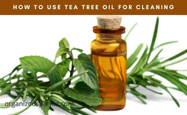 home cleaning with tea tree oil