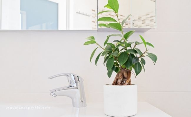 Plants in bathroom add a finishing touch